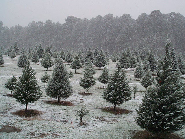 Texas snow storm occurred at Mill Hollow on Friday, December4, 2009 ...